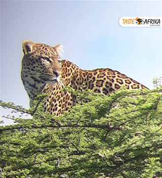 Enjoy Your Trip with the Best Safari Operators in Tanzania
