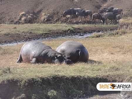 Arusha National Park Tanzania - Scenic Views with TasteofAfrika