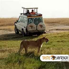 Arusha to Tarangire National Park Trips with TasteofAfrika